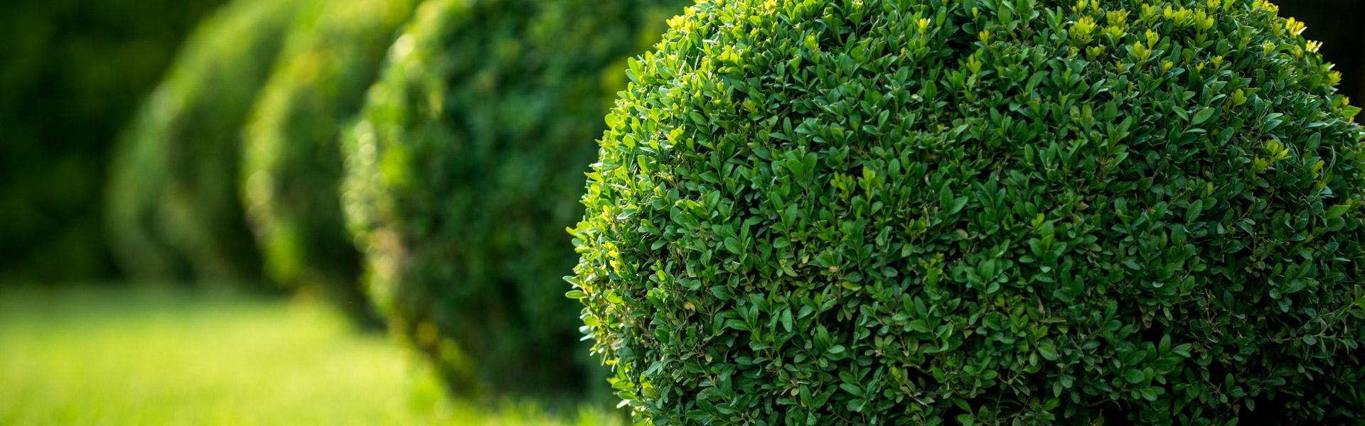 Espaces Verts, Horticulteurs, Pépiniéristes