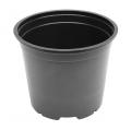Pot Noir - 15cm - 5°