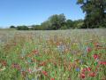 Jachère Fleurie Biodiversité